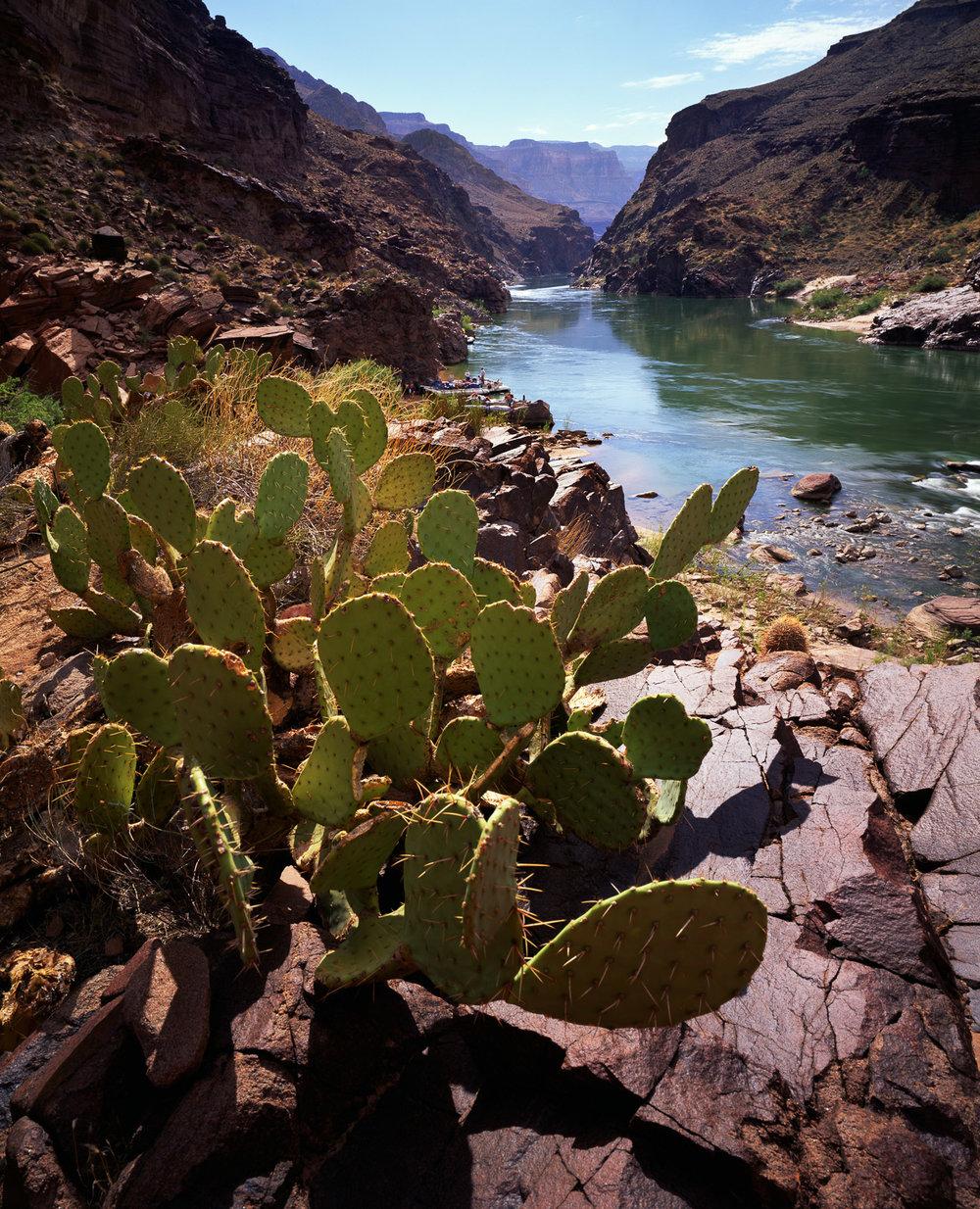 """Middle Granite Gorge at Deer Creek, Colorado River Grand Canyon NP, Kaibab NF  ARIZONA"""