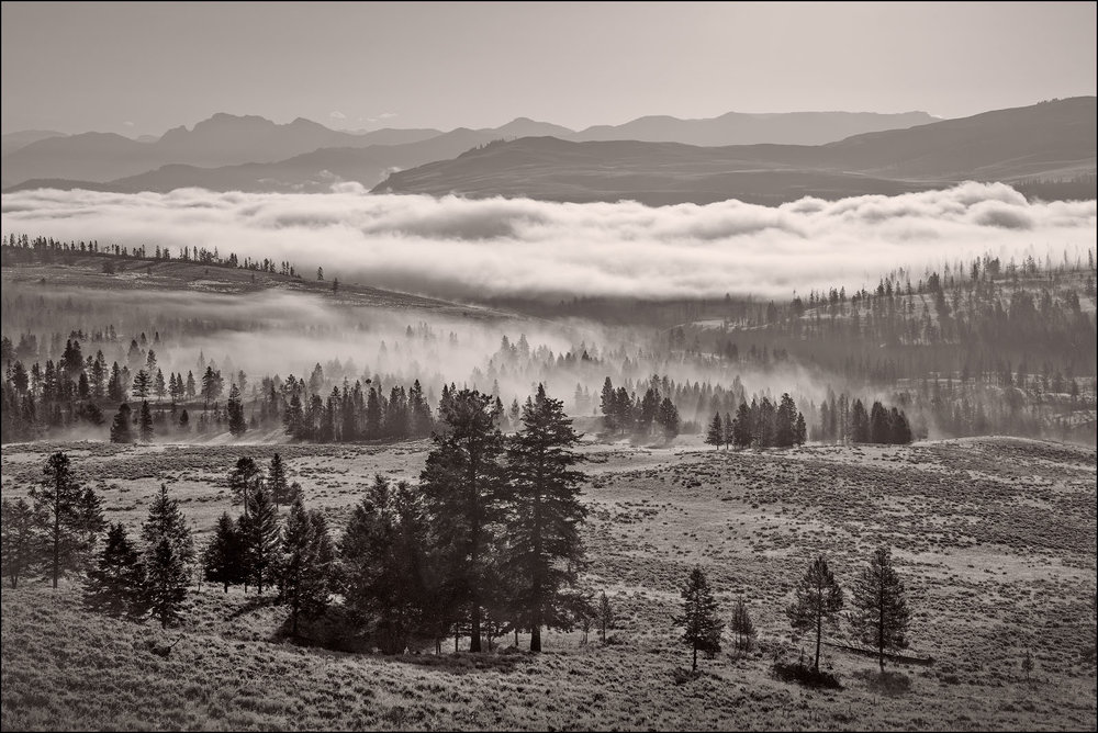 Fog in the valley, Yellowstone National Park. Somewhere between Lamar Buffalo Ranch and Slough Creek.