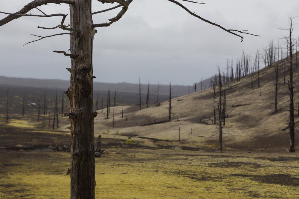 © Denis Budkov Dead forest Kamchatka tour Russia.JPG