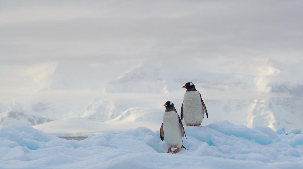 photo_workshop_antarctica -4.jpg