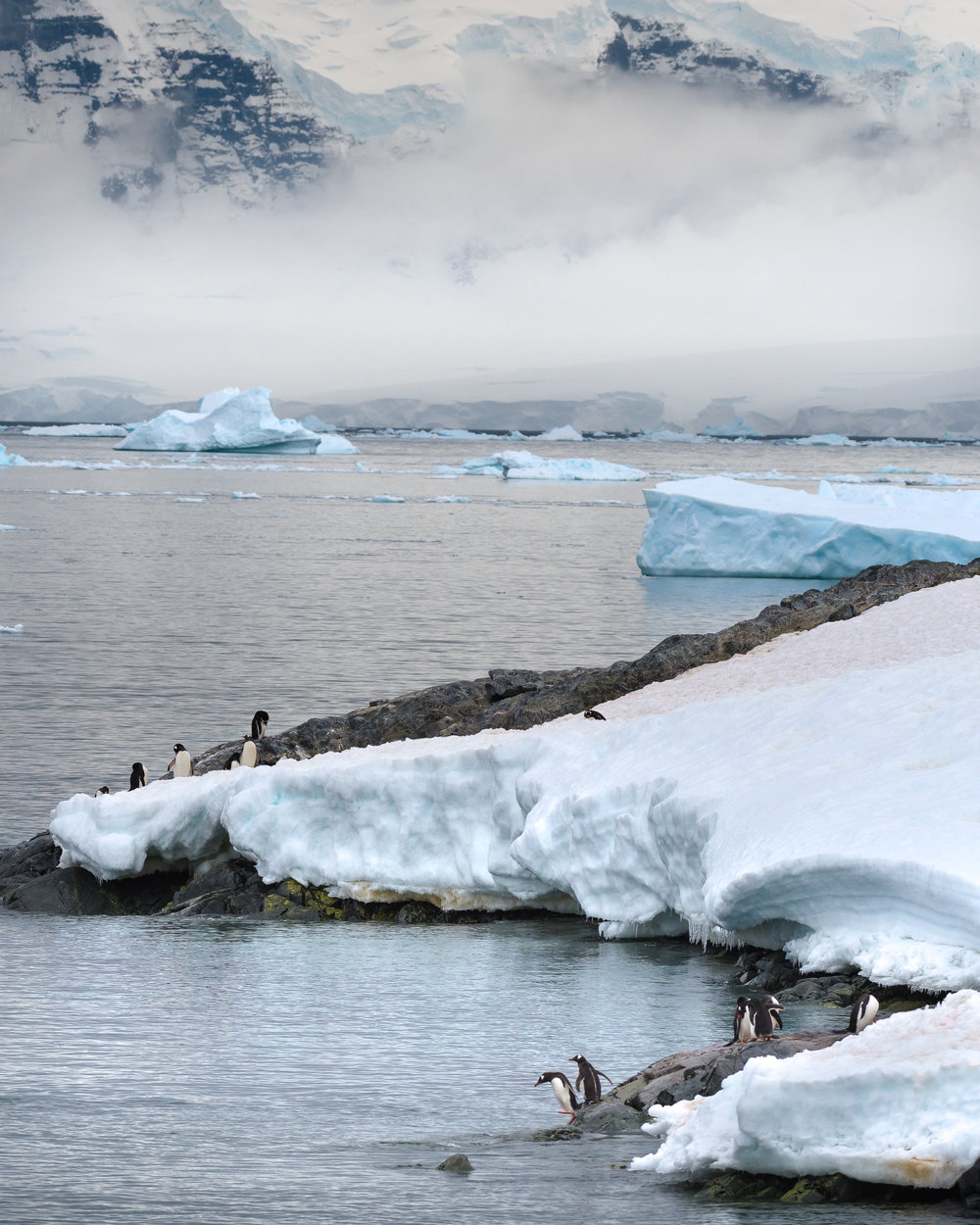 photo_workshop_antarctica -6.jpg