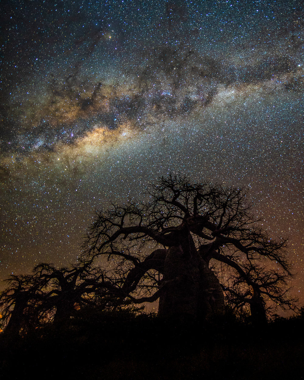 muench-workshops-baobabs-africa-milky-way.jpg