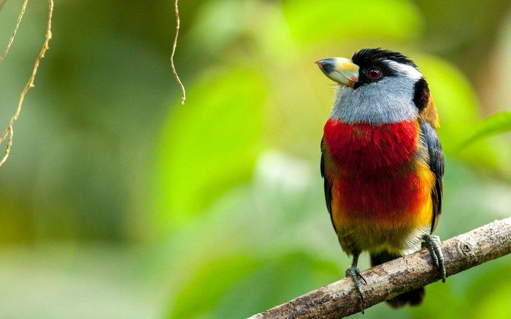 Ecuador_Mashpi-Lodge_wildlife-1728x1080.jpg