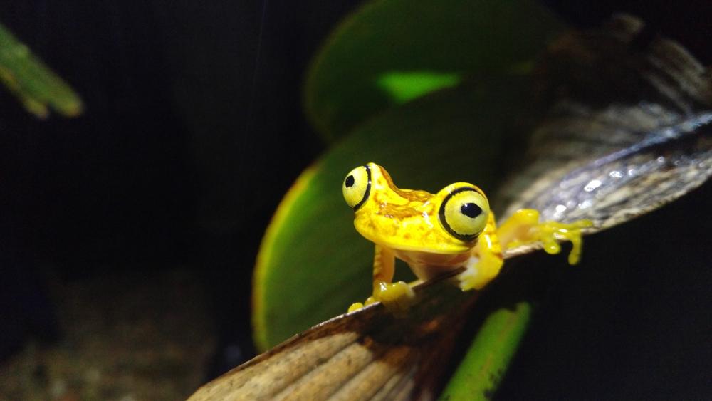 mashpi-lodge-frog.jpg