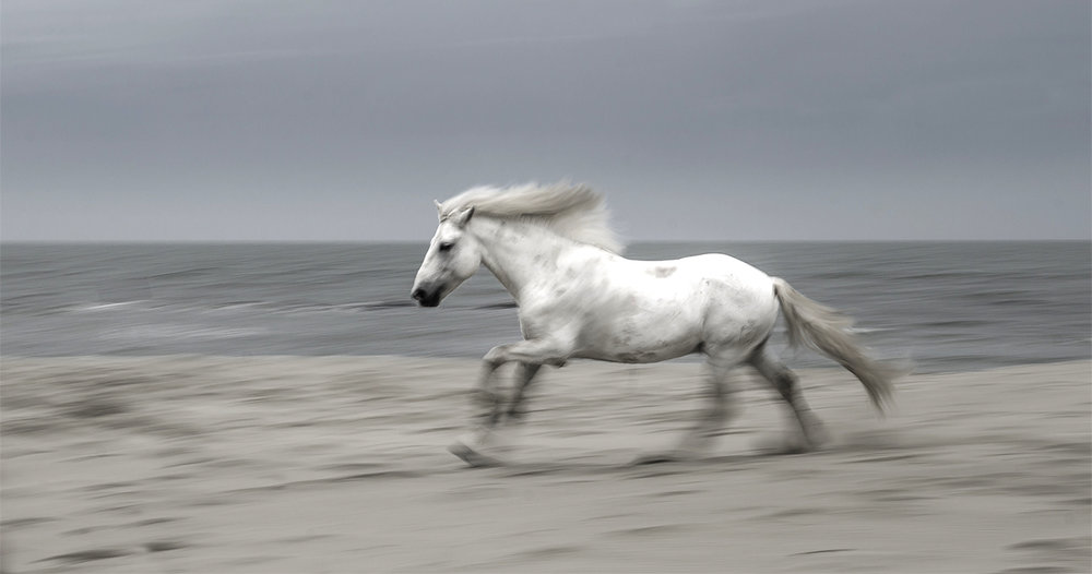 camargue stallion at the sea.jpg
