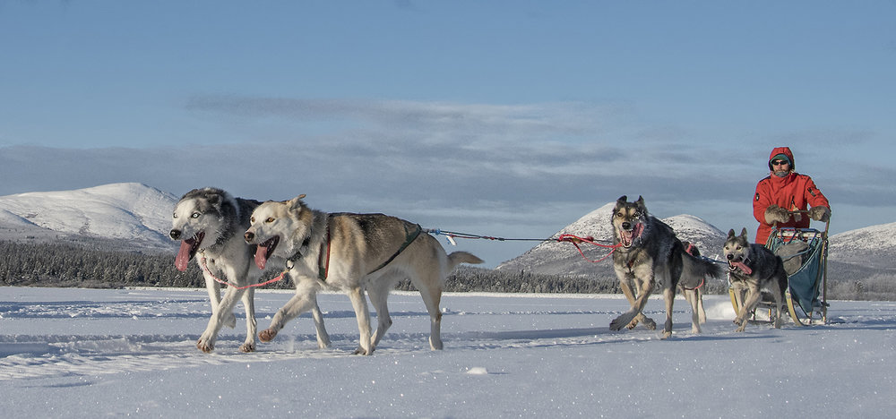 dog sled team.jpg