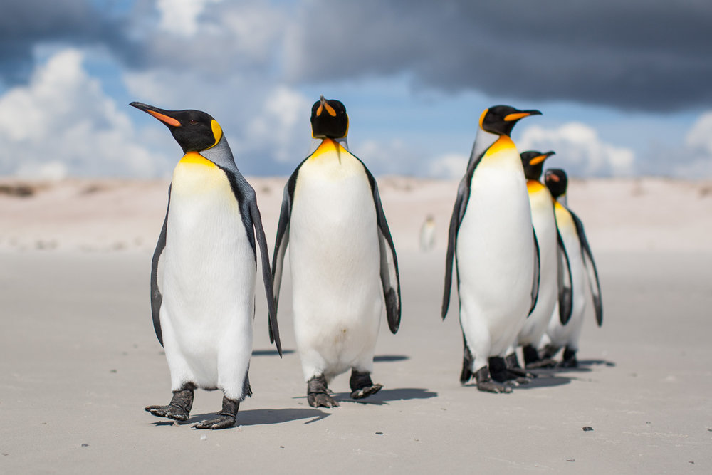 muench-workshops-falklands-south-georgia-antarctica-will-burrard-lucas-4.jpg