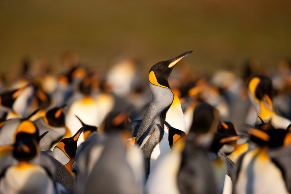 muench-workshops-falklands-south-georgia-antarctica-will-burrard-lucas-5.jpg