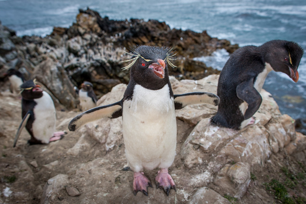 muench-workshops-falklands-south-georgia-antarctica-will-burrard-lucas-13.jpg