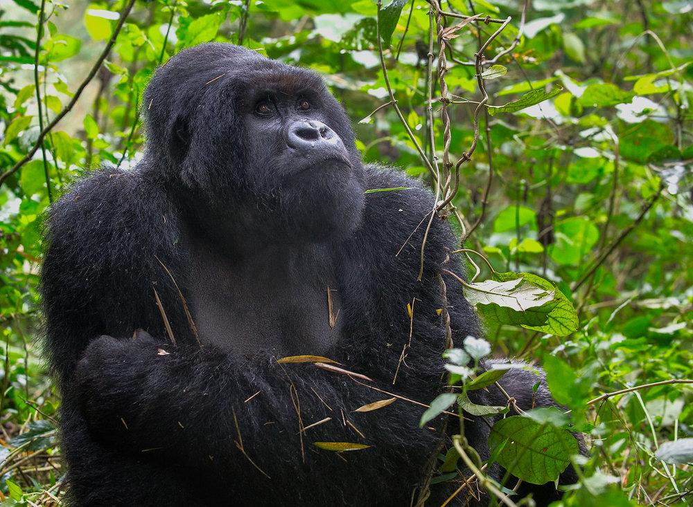 20150701_Rwanda_D4_340.jpg