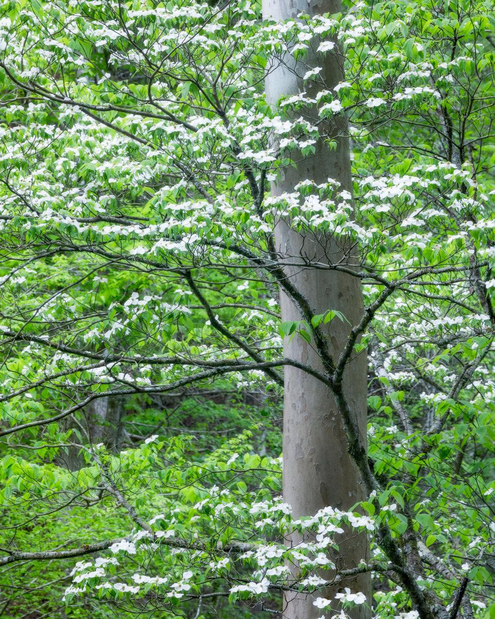 Spring Mélange
