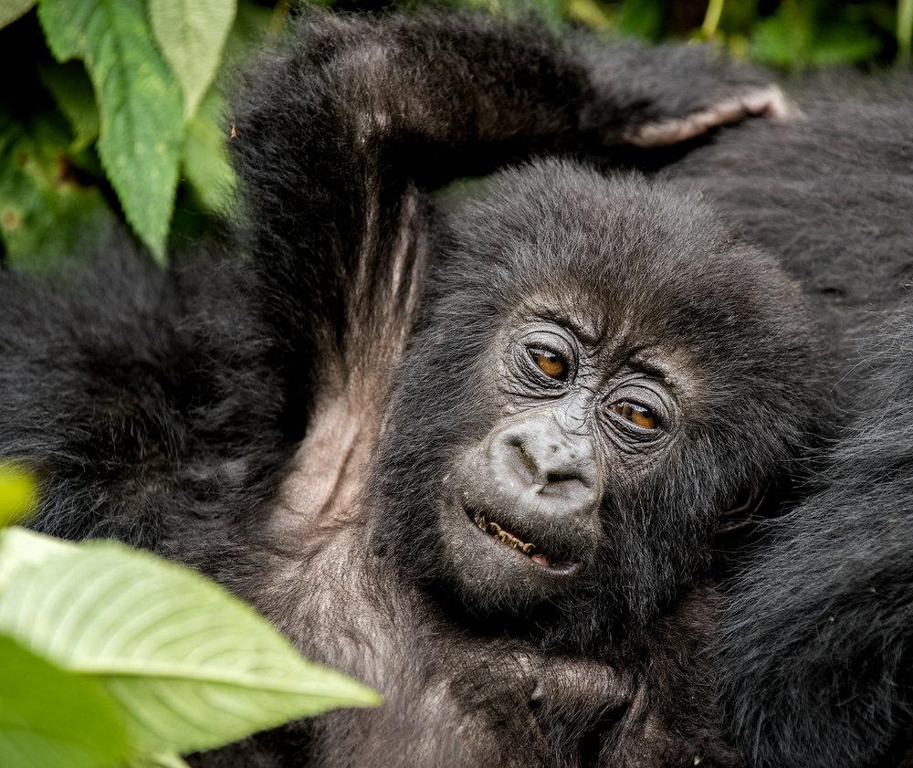 20150703_Rwanda_D810_1288.jpg