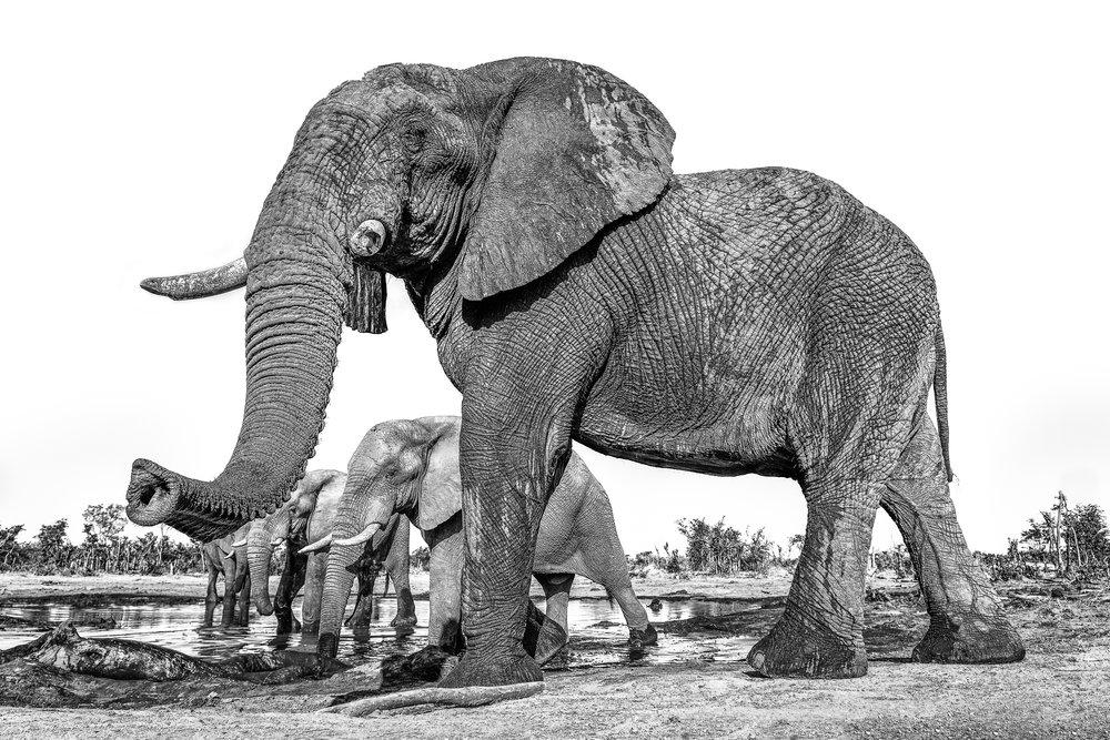 Botswana-00255-Edit-Edit.jpg
