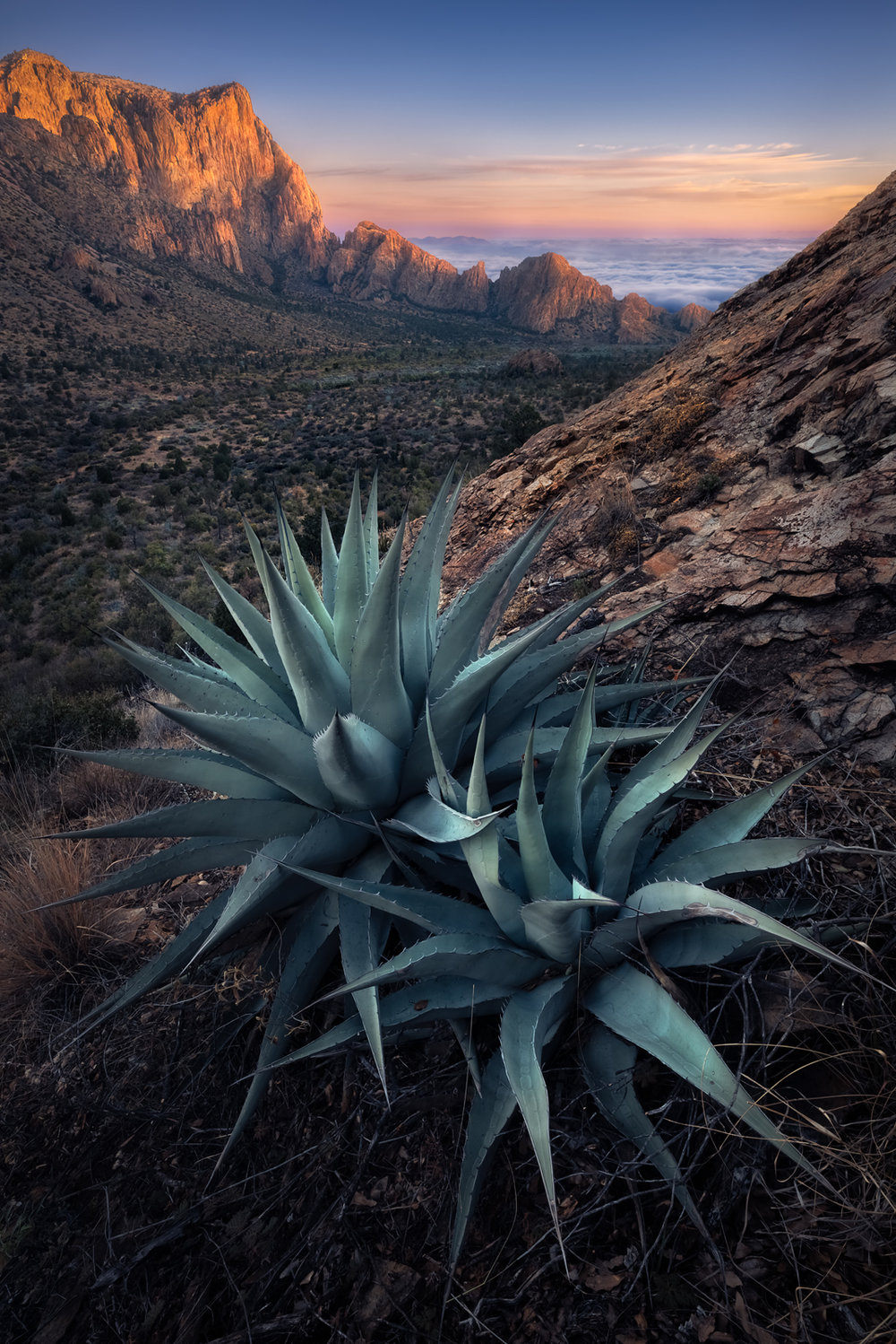Chisos Agave for Muench Workshops.jpg