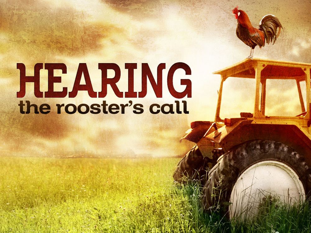 roosters_call.jpg