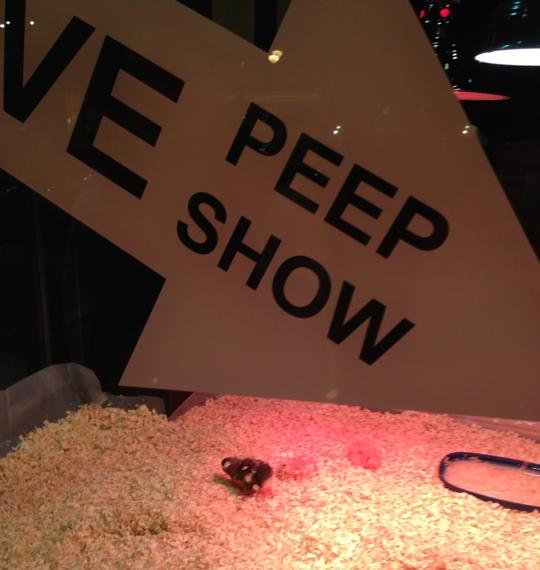 dc-h-street-peep-show-easter.jpg