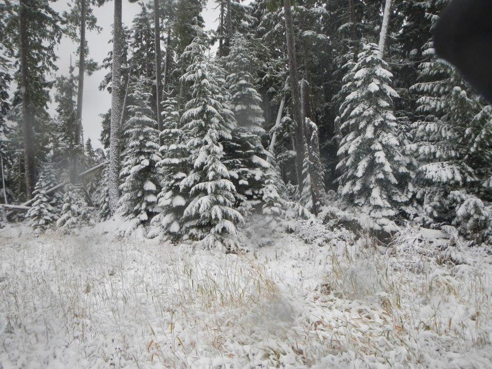 snowforrest1