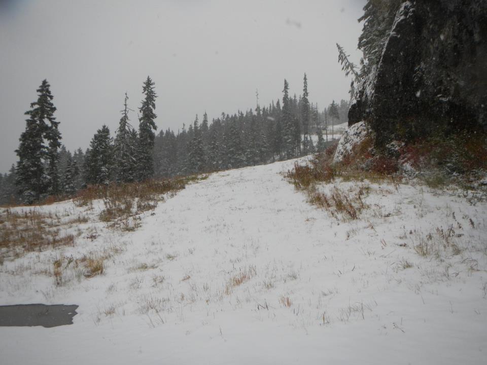 snowforrest3