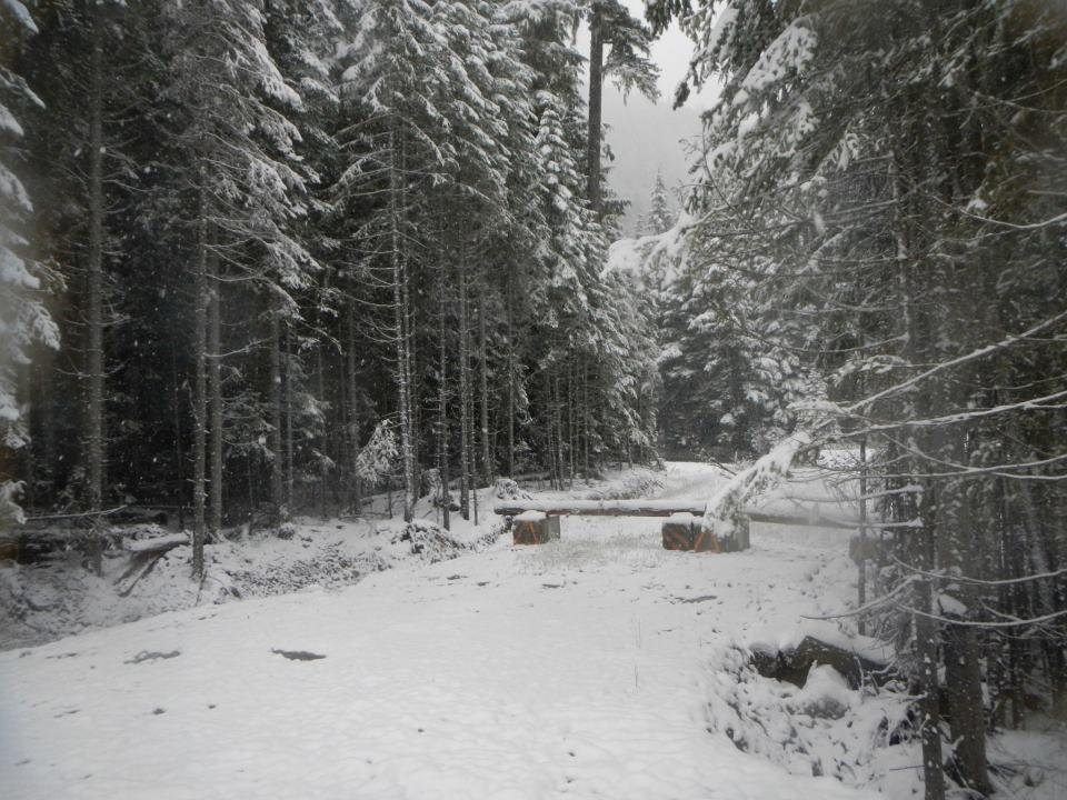 snowforrest5