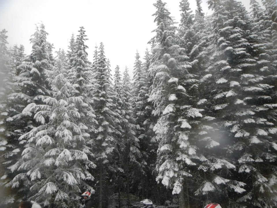 snowforrest4