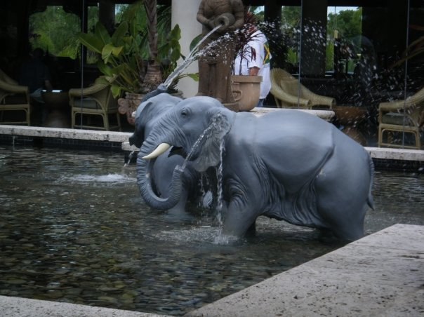 Loews had it's own elephant bathing pool...and they all have their trunks on!