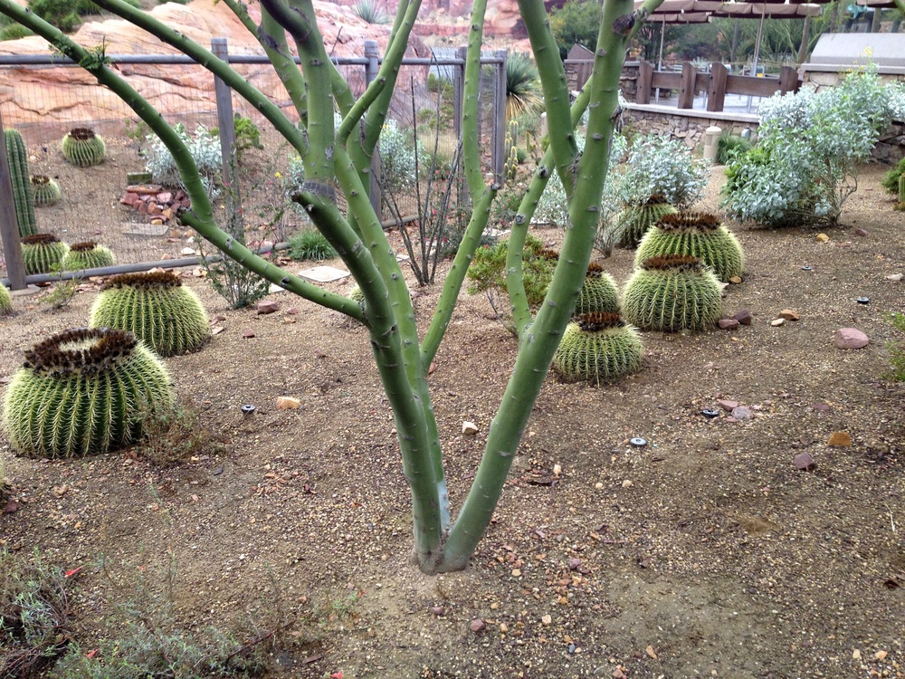Cactus in the queue