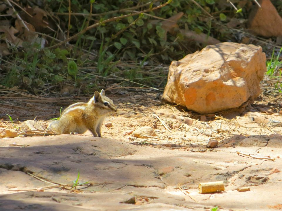 A cute little chipmunk on the hike,