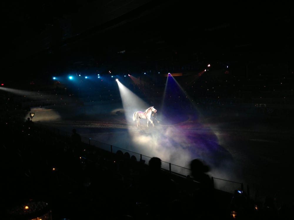 One of the best parts of the show is when a beautiful white horse runs out into the arena at the start.