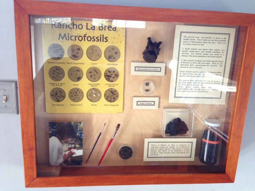 Microfossil display.