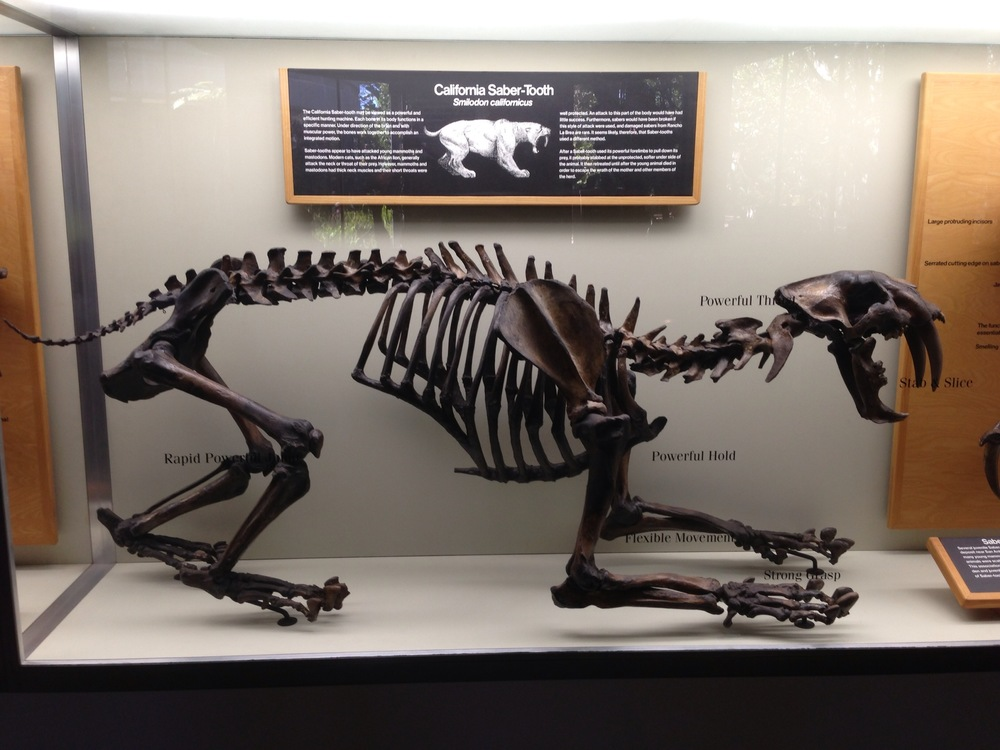 A Saber Tooth Cat.