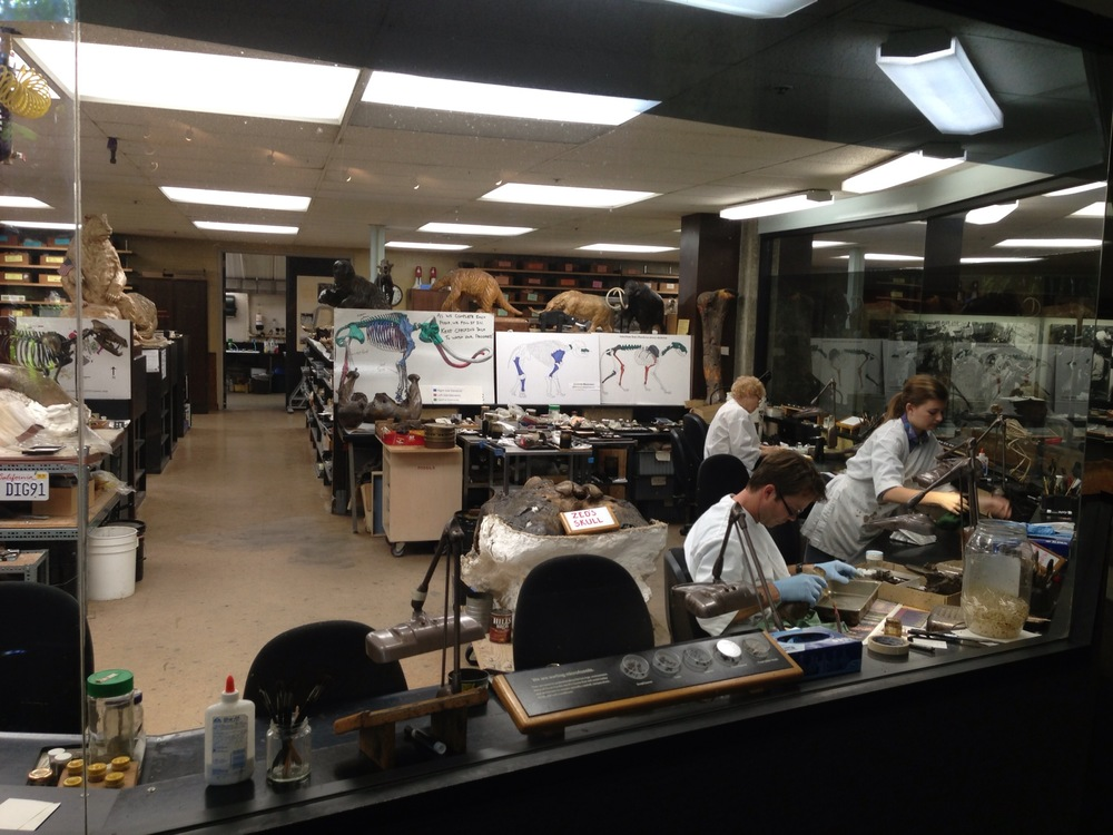 Probably the best thing in the museum, the view of the fossil lab.