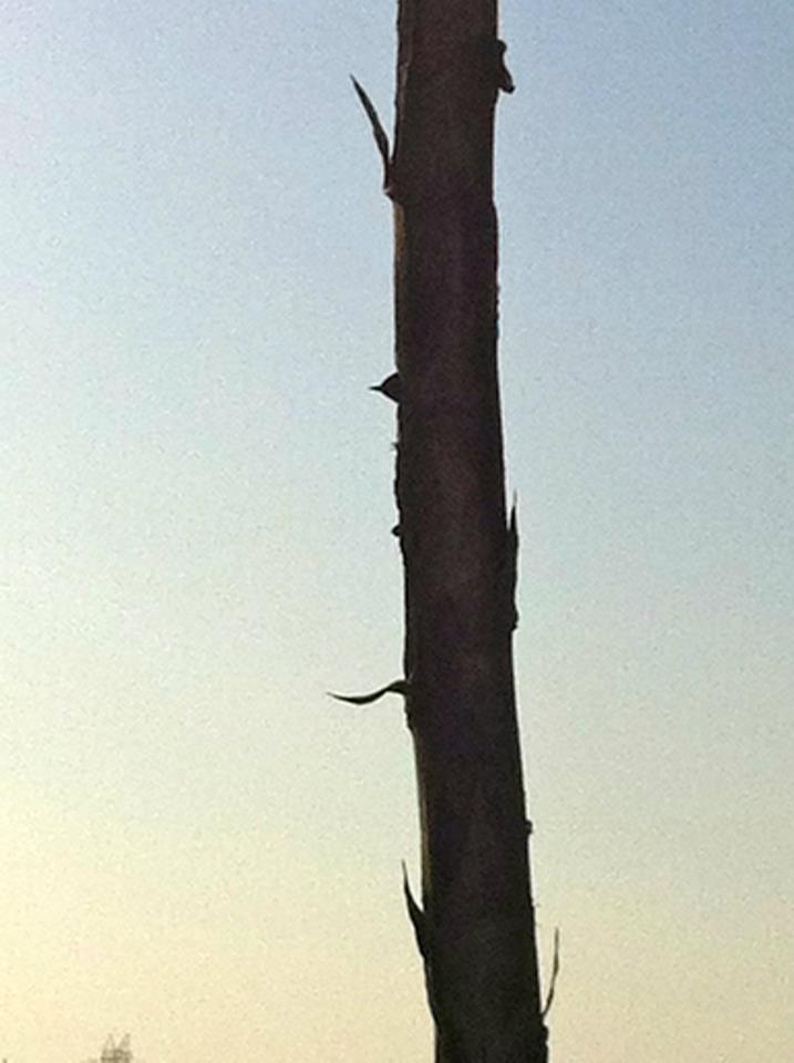 A woodpecker in a tree.