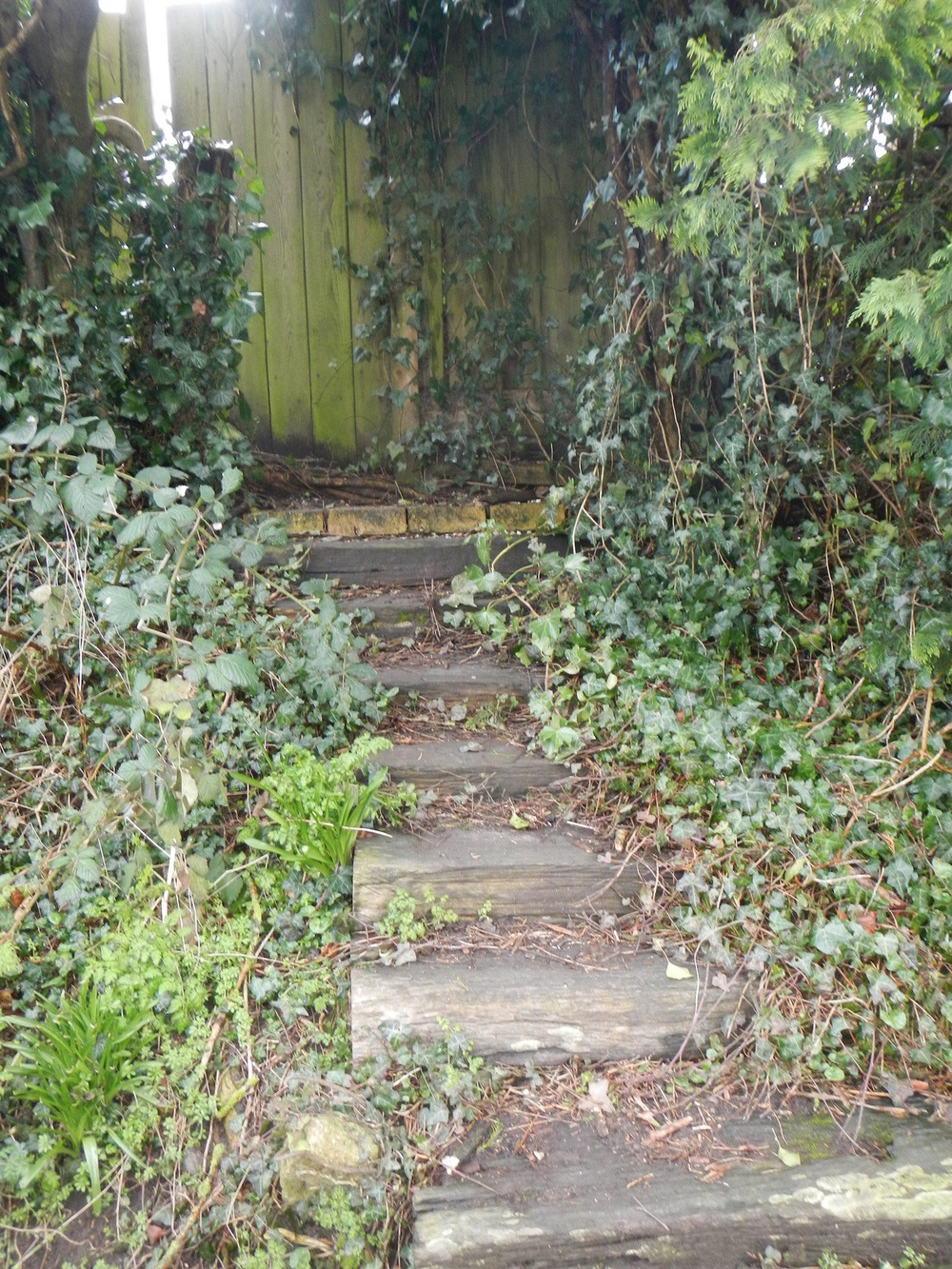 Ivy lined path