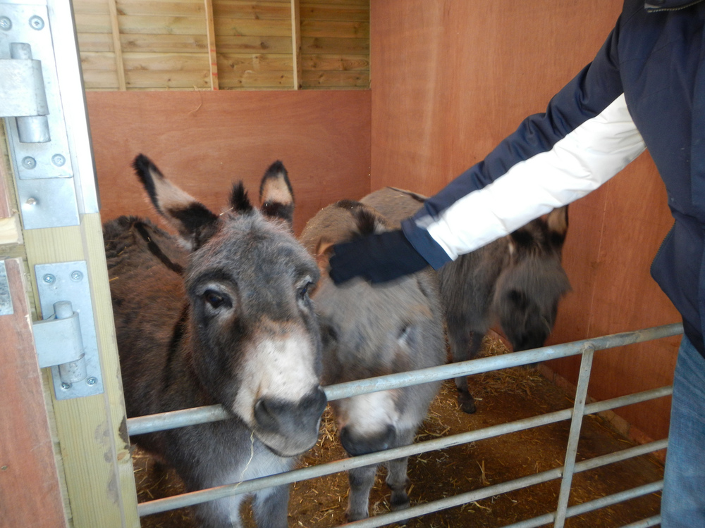 Donkeys. The one in the middle kept getting shoved by the other two.