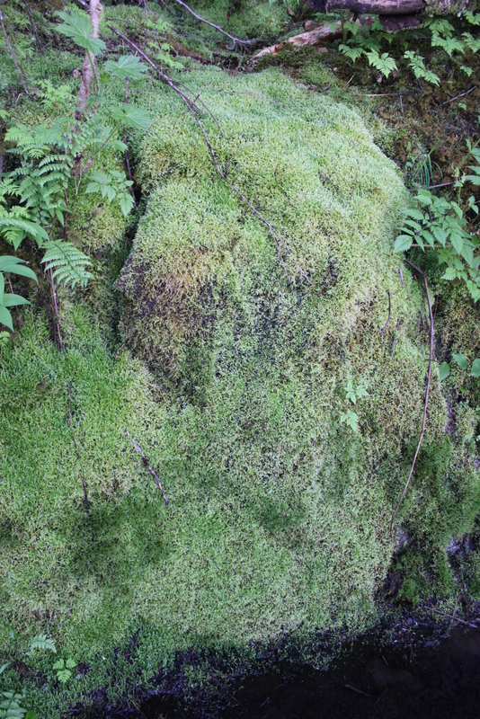 A carpet of moss along the towering rocks.  I was tempted to curl up and take a nap.