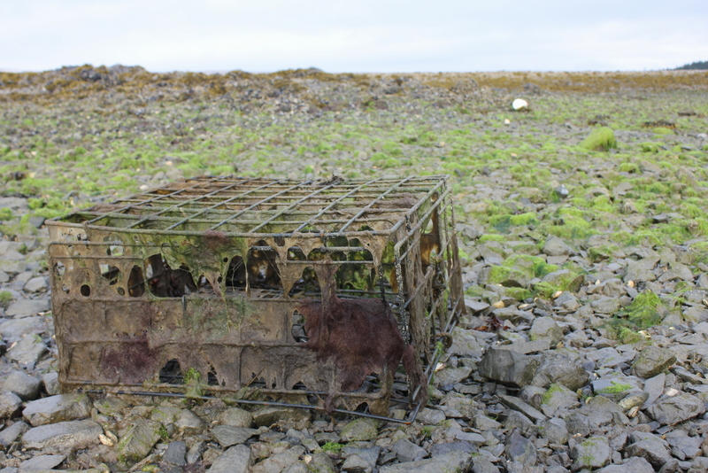 An abandoned crab pot.