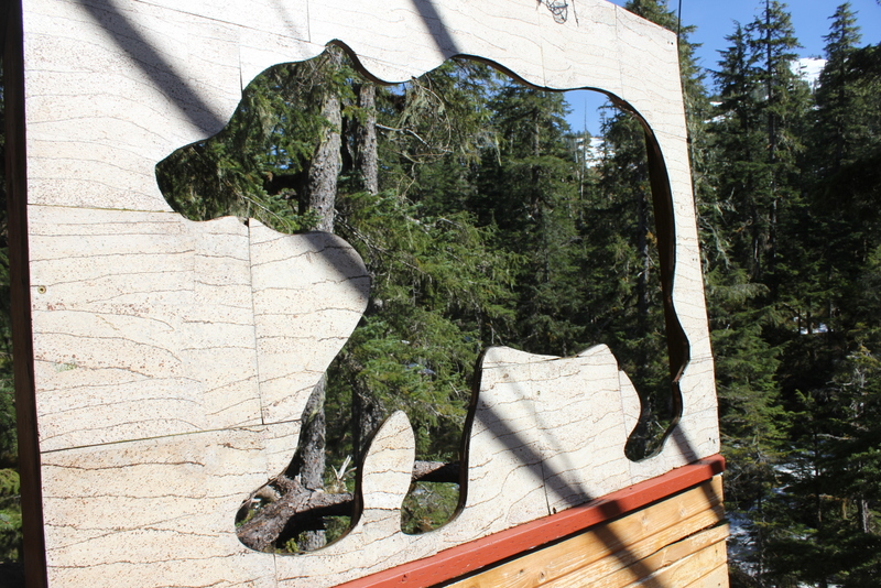 Bear spotting!