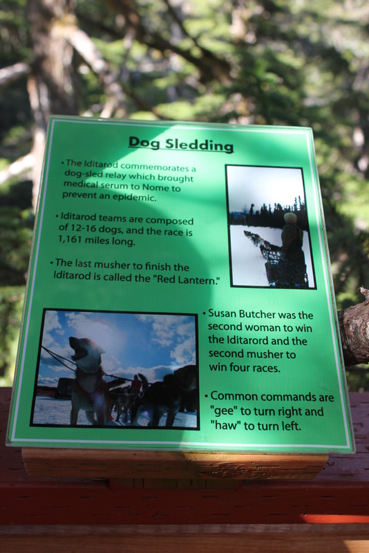 Several of the tree-top platforms were themed to give visitors a little insider knowledge about Alaska.  This informational sign featured my favorite Alaska sport: dog sledding.