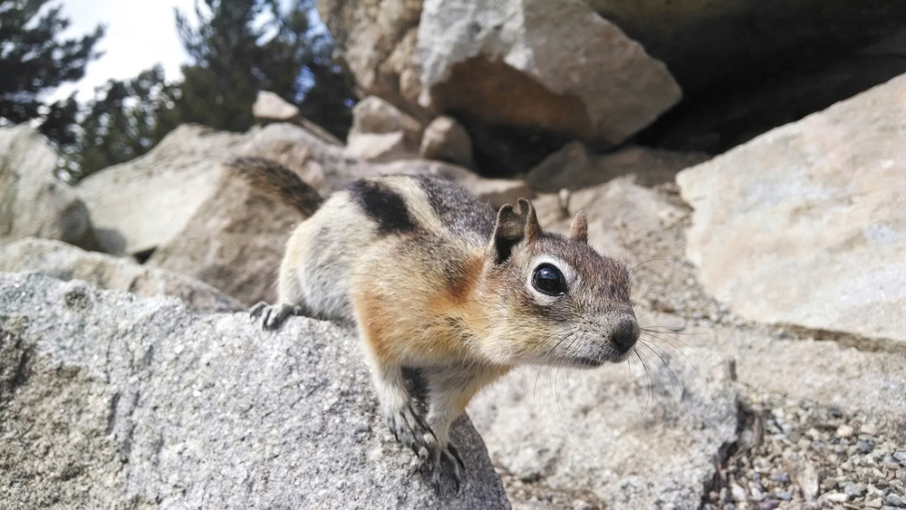 A chipmunk gives me the once over on Sapphire Point.
