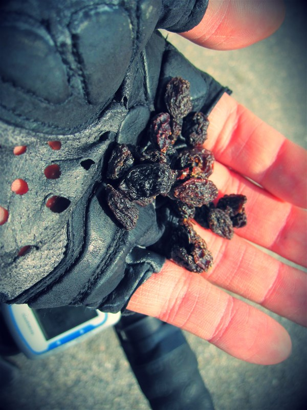 It's sometimes nice to vary the ride snacks. Raisins are great nutrition for your rides with plenty of fructose and energy.