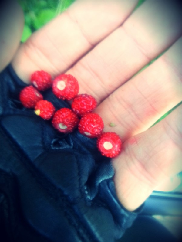 No summer without wild strawberries, a must-stop when you see these on a easy ride.