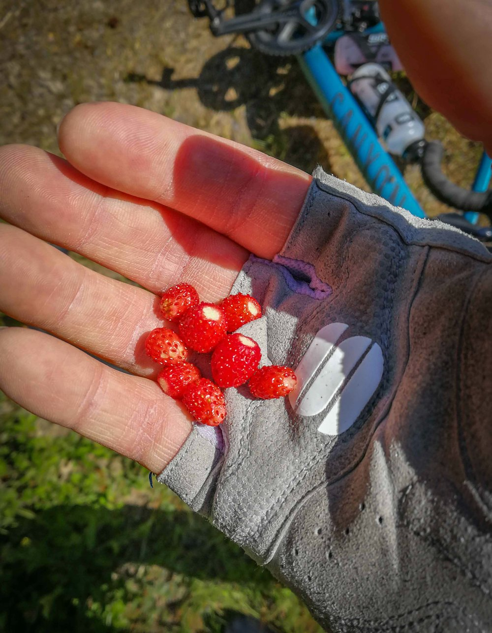The most impressive piece of superfood there is. Wild strawberries is a must eat during the summer season. Heaven.