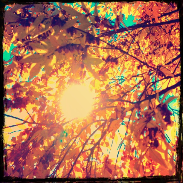 Sunlight Through Yellow Leaves