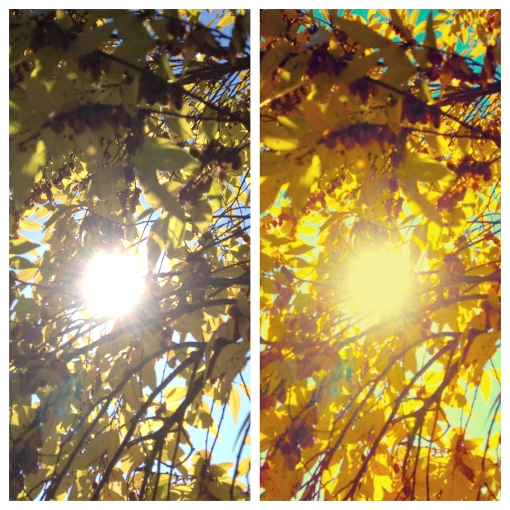 "L: Original / R: Vintique ""Delight"" Filter - November 2012"