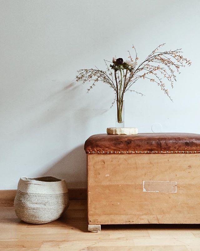 | the beauty of simplicity | gestern durften ginster und anemone einziehen... oh wie das duftet! #zuhausebeininotschka