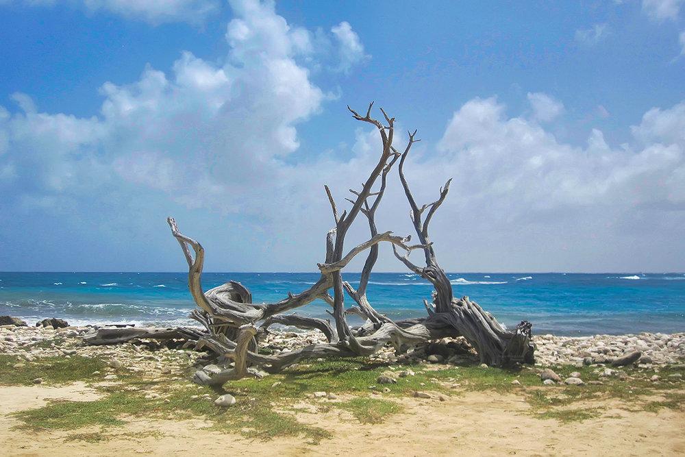 Bonaire Drift Wood