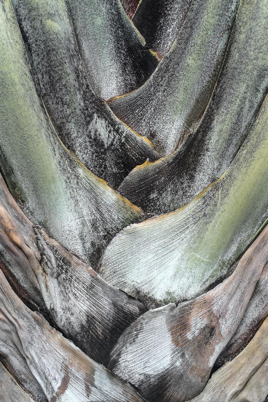 palm_tree_1.jpg
