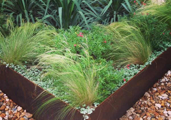 Get Money Back on Your Native Plant Landscaping! - Get Money Back On Your Native Plant Landscaping! — Terra Dura Landscapes