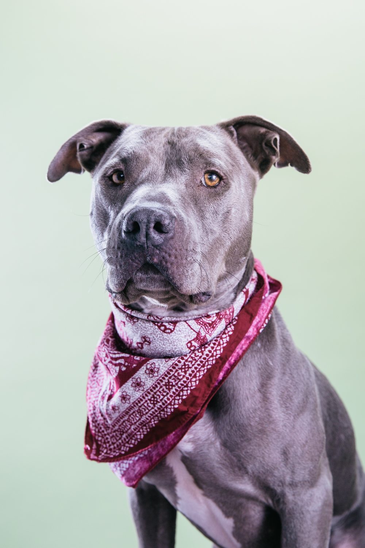 Smolowe_CHEWSLIFE_Dogs-42016.jpg