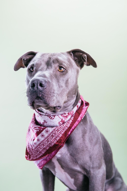 Smolowe_CHEWSLIFE_Dogs-52016.jpg
